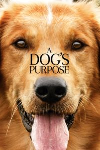 "Poster for the movie ""A Dog's Purpose"""